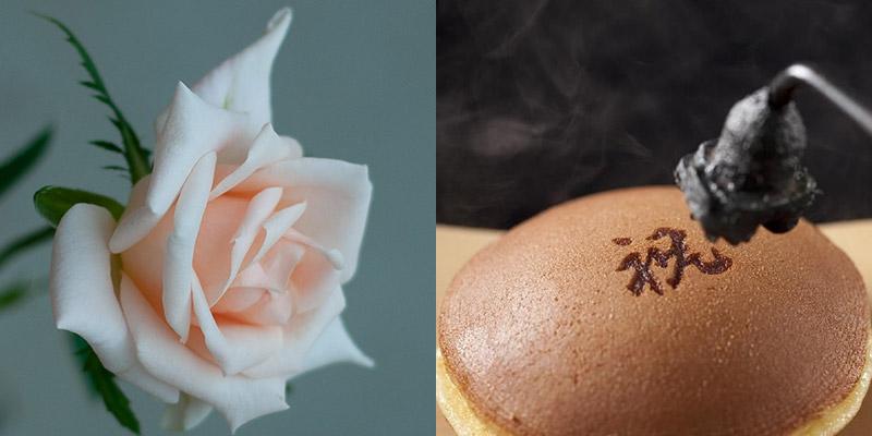 ご成婚の際に献上したバラ「プリンセスマサコ」の展示も
